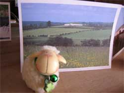 Boyne Valley Wools sheep souvenir
